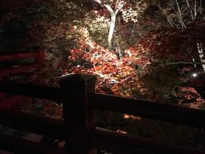 弥彦「もみじ谷」の紅葉